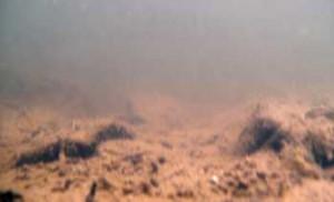 Der Rhein - Auch Unterwasseraufnahmen sind mit der Panasonic HX-WA10 bis zu einer Tiefe von 3 Metern möglich.