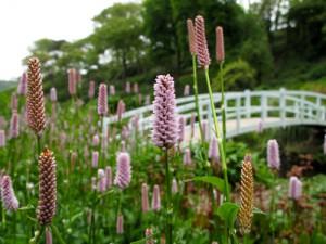Im Trebah Garden, wo seit über 160 Jahren die  unterschiedlichsten Pflanzen blühen, können Besucher die Seele baumeln  lassen.   Foto: Daniela Klütsch