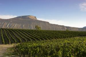 Weingut in der Nähe von Palisade